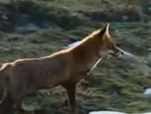 点击观看《《狐狸与孩子》完整版》
