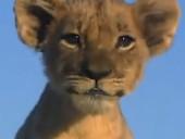 点击观看《《狮路历程》高清完整版》