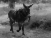 《驴子巴特萨》完整版
